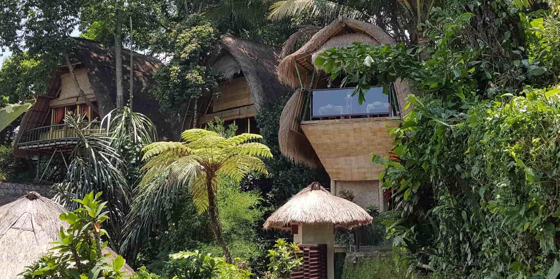 Индонезия, отдых на Бали, тур в Убуд