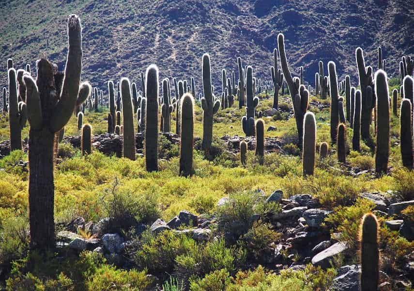 Аргентина. Сальта. Лос Кардонес - национальный парк какту