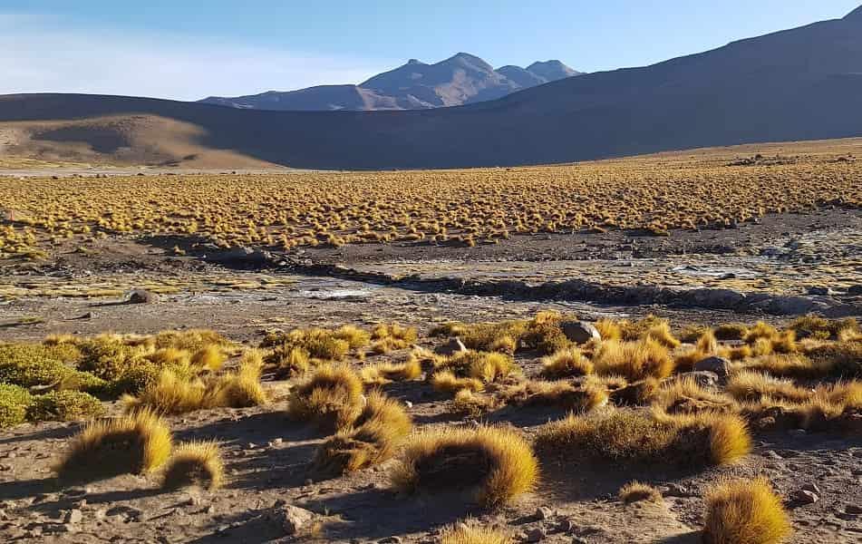 Чили. Экскурсии в пустыне Атакама