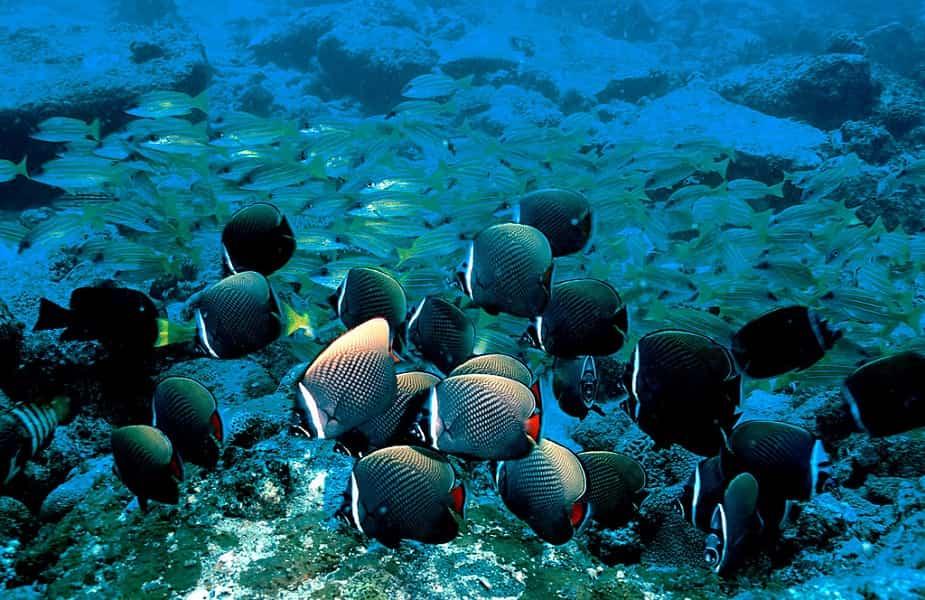 Дайвинг в Индии. Андаманские острова. Коралы и рыбы