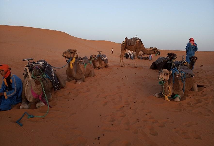 Экскурсионный тур в Марокко. Пустыня Сахара. Караван