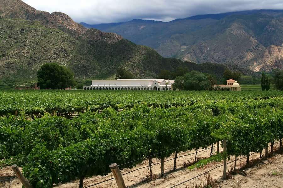 Экскурсионные туры в Аргентину. Кафаяте. Виноградные поля