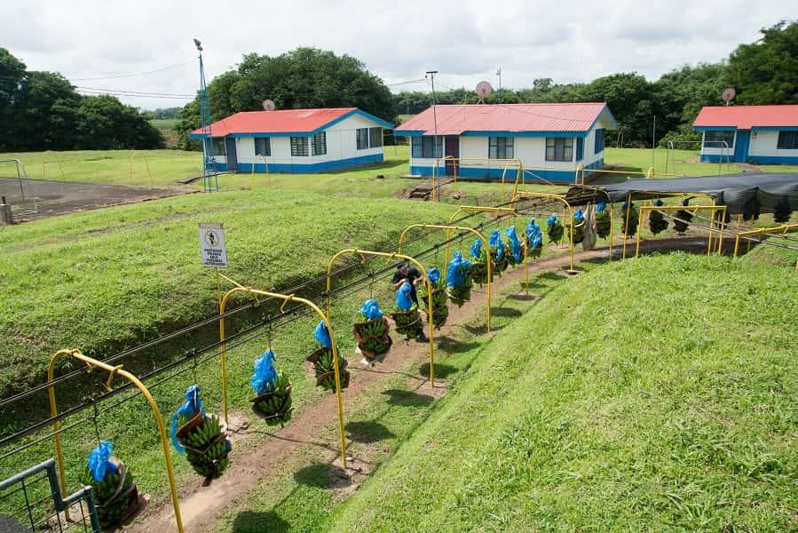 Экскурсионные туры в Коста Рику. Сбор бананов