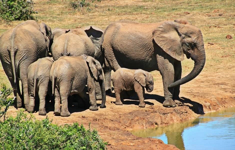 Экскурсионные туры в Танзанию. Тарангире. Стадо Слонов