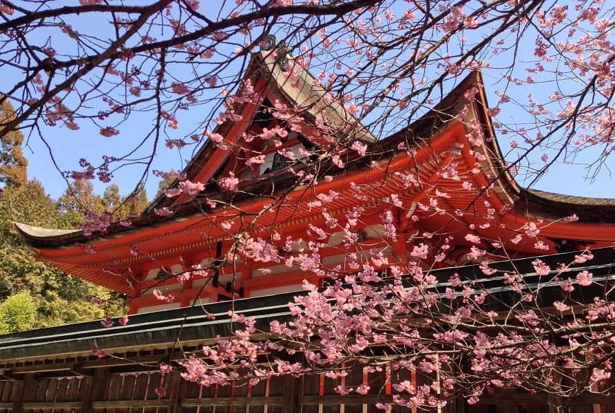 Экскурсионные туры в Японию. Сакура и Замок
