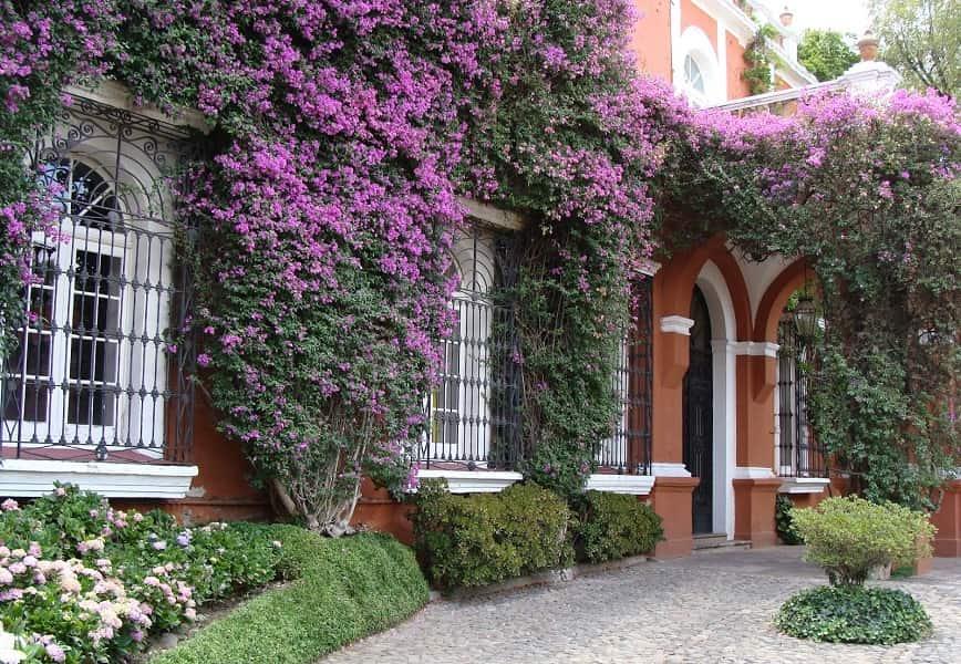 Груповые туры в Мексику. Мехико сити. Старинный дворик