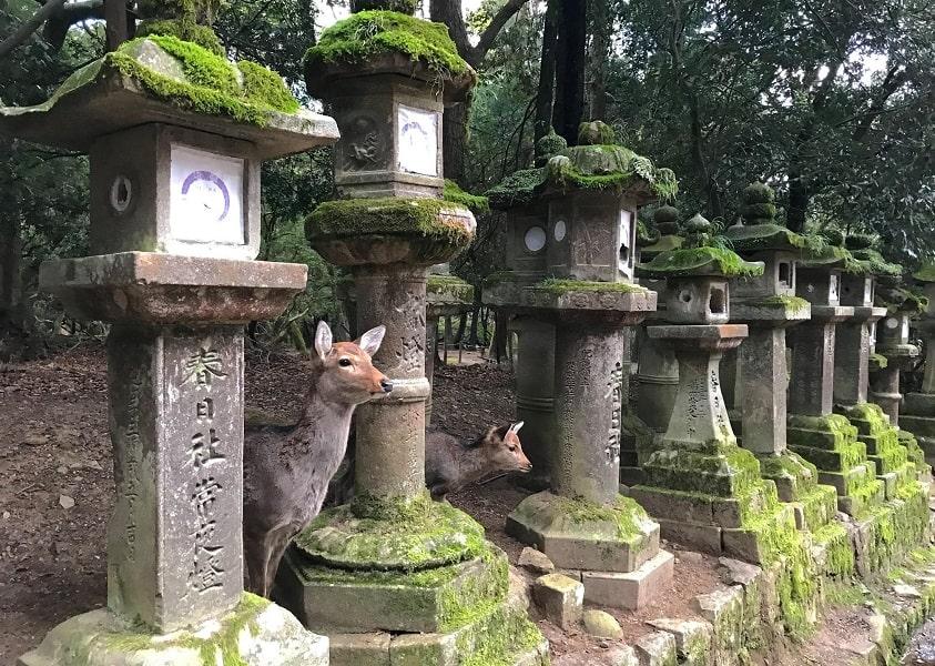 Групповой тур по Японии. Нара. Парк с оленями