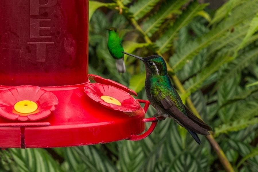 Групповые туры в Коста Рику. Колибри фото