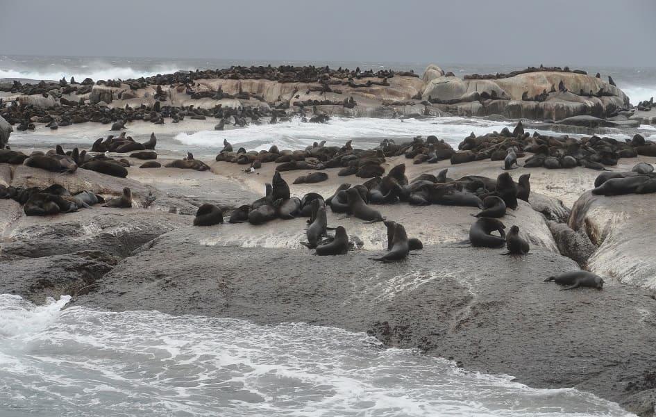 Индивидуальные туры в ЮАР. Кейптаун. Круиз к морским котикам