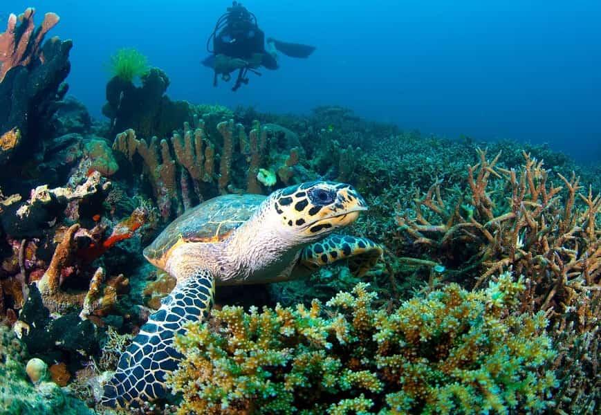 Туры в Малайзию. Остров Селинган. Морская черепаха.