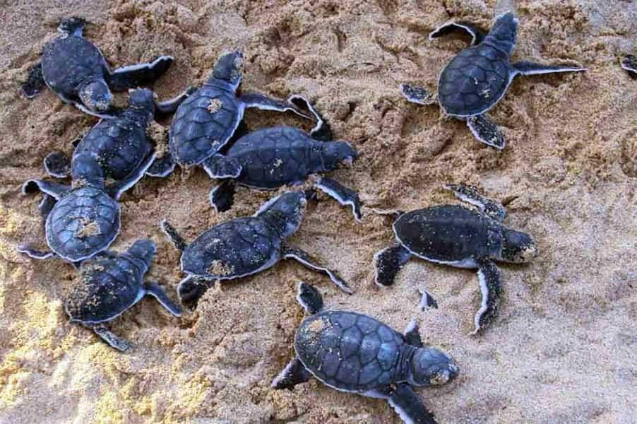 Малайзия. Поездка на остров Селинган. Питомник черепах.