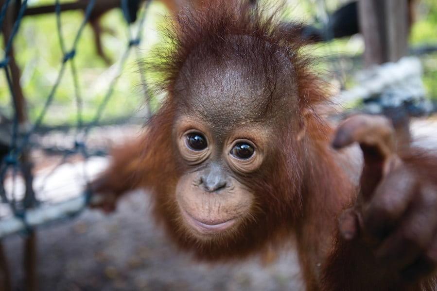 Путевки в Малайзию. Остров орангутангов.