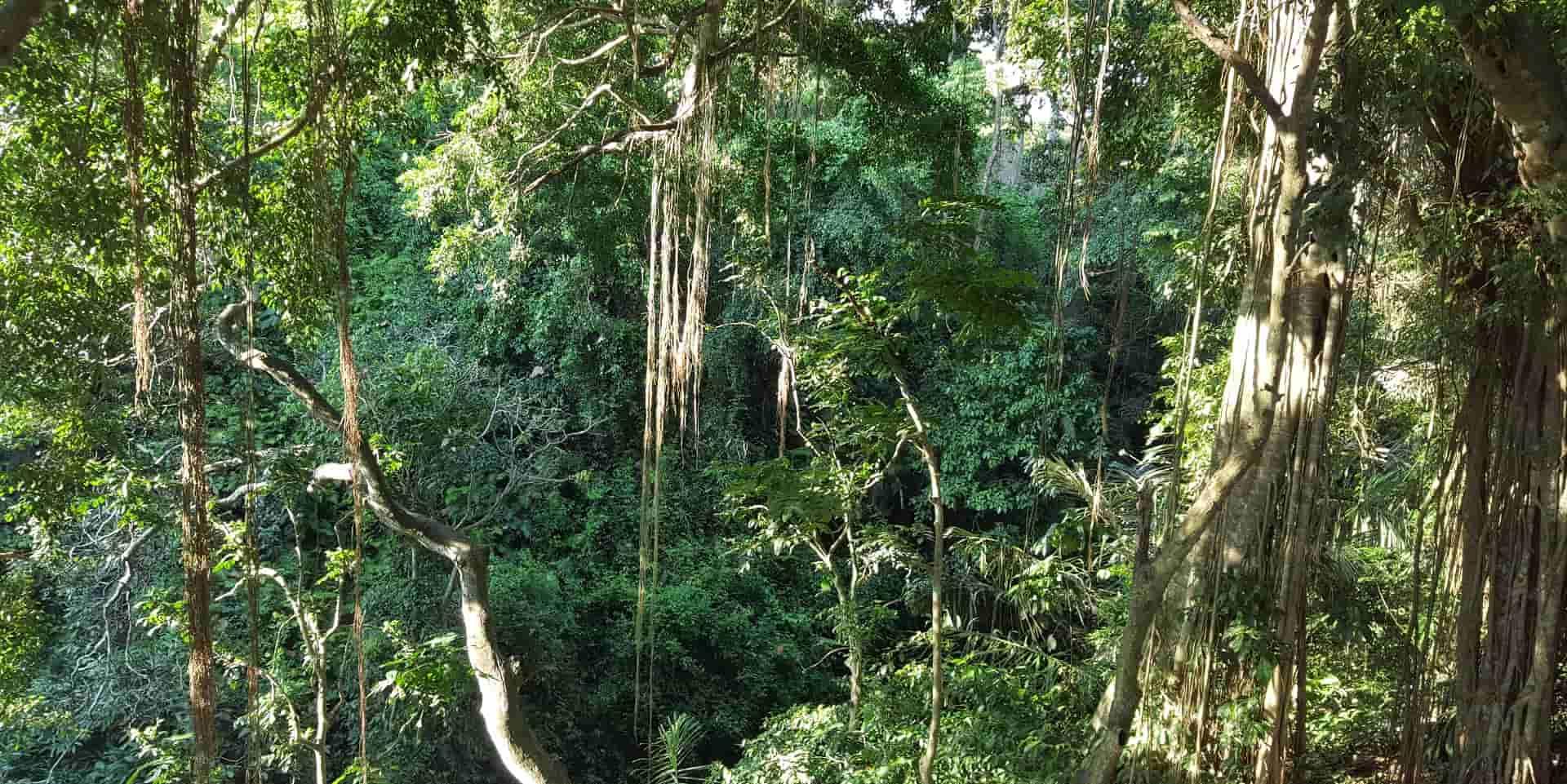 Отдых на Бали. Убуд. Лес обезъян