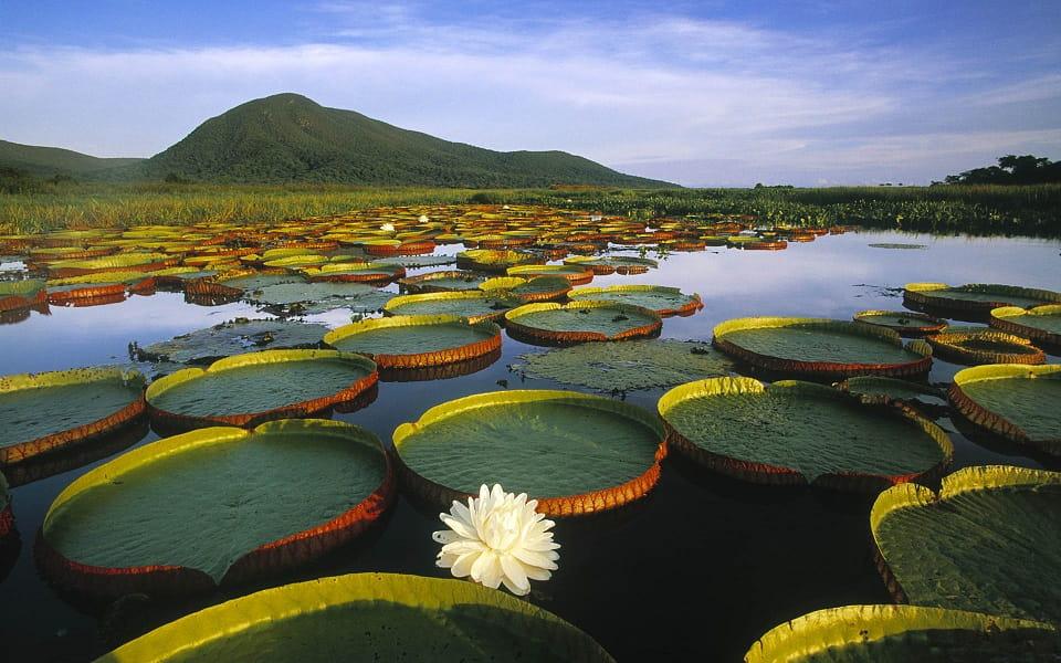 Отдых в Бразилии. Пейзажи Пантанала