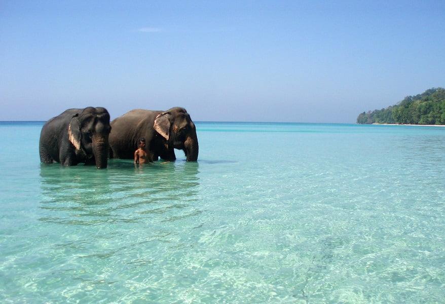Отдых в Индии из Киева. Андаманы. Слоны в воде
