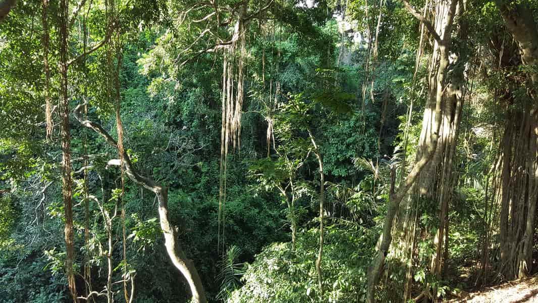 Отдых в Индонезии. Бали. Лес Обезьян в Убуде