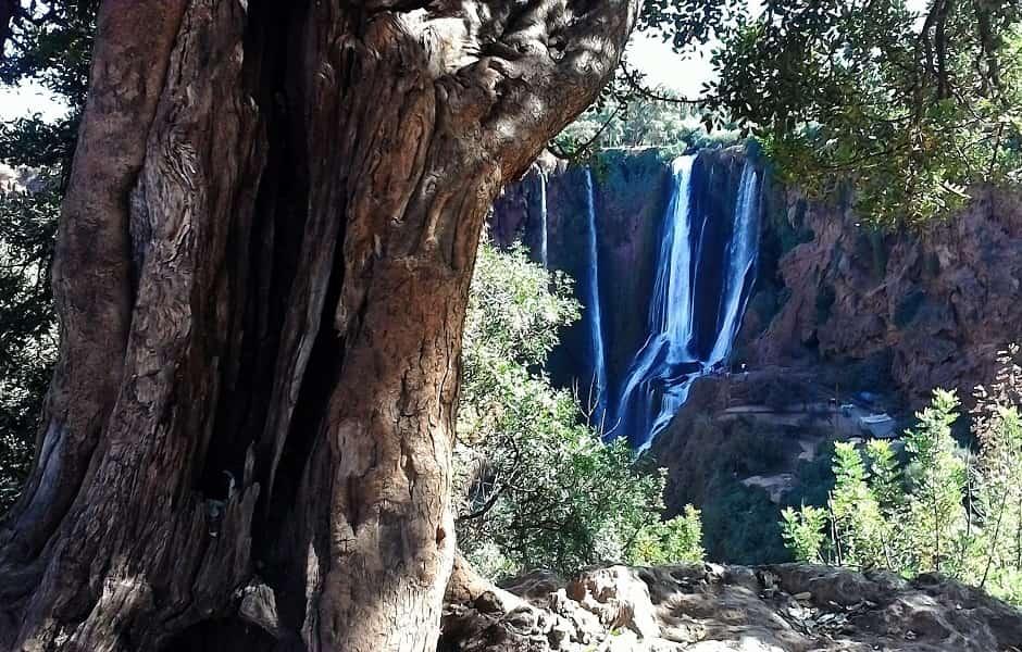 Отдых в Марокко. Каскады Узуд и Дерево