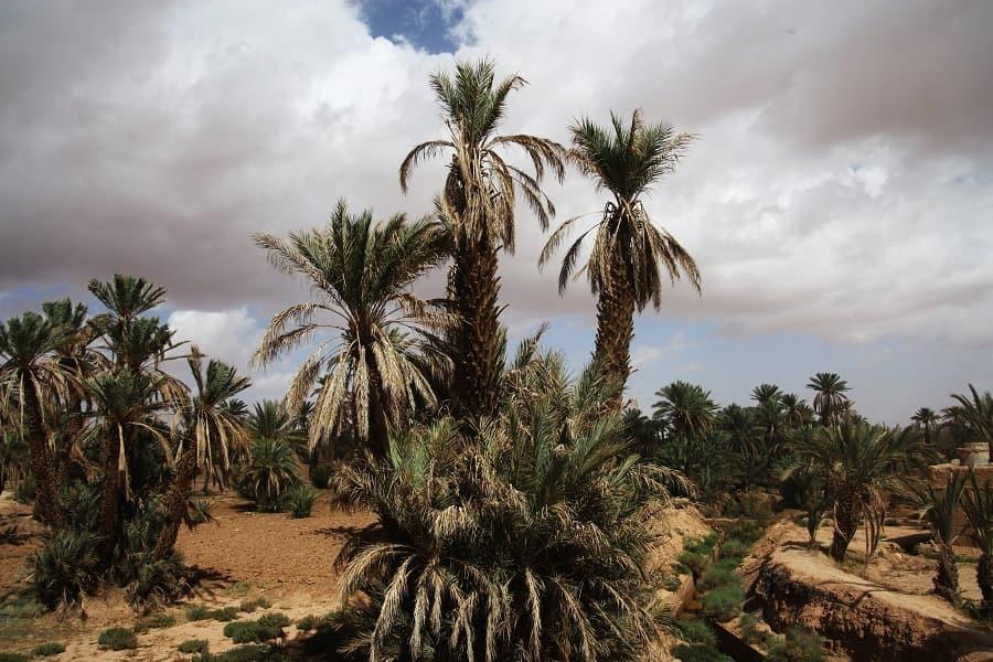 Отдых в Марокко. Оазис фото