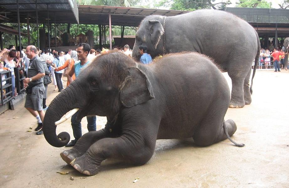 Отдых в Таиланде. Паттайя. Шоу слонов в парке Нонг Нуч