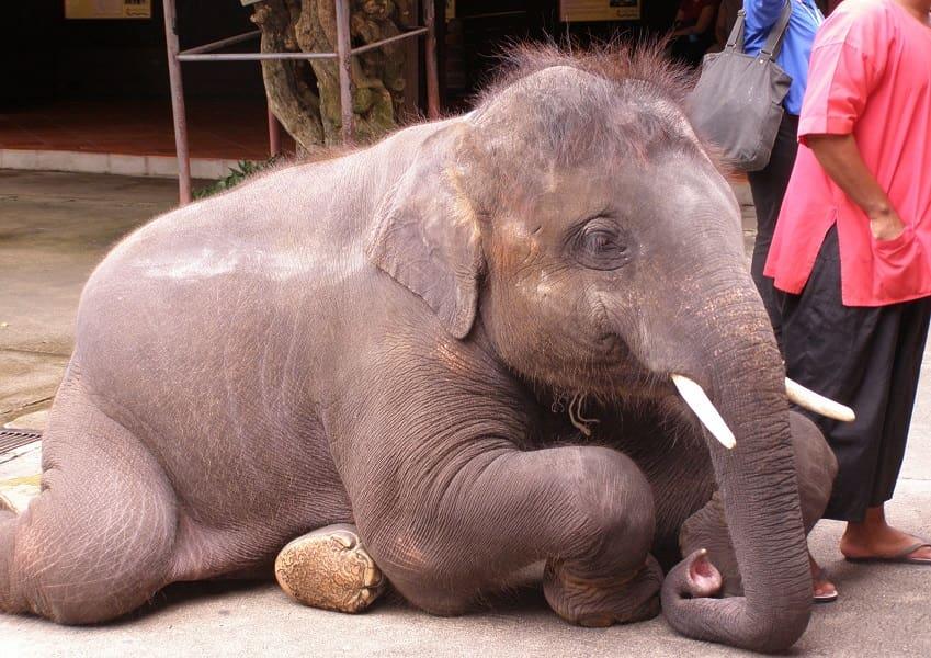 Отдых в Тайланде. Паттайя. Слоник в парке Нонг Нуч