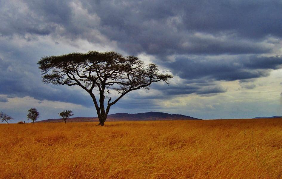 Отдых в Танзании. Серенгети. Саванна