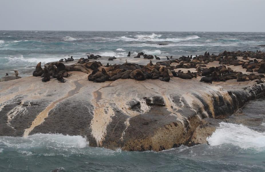 Отдых в ЮАР. Кейптаун. Экскурсия к морским котикам