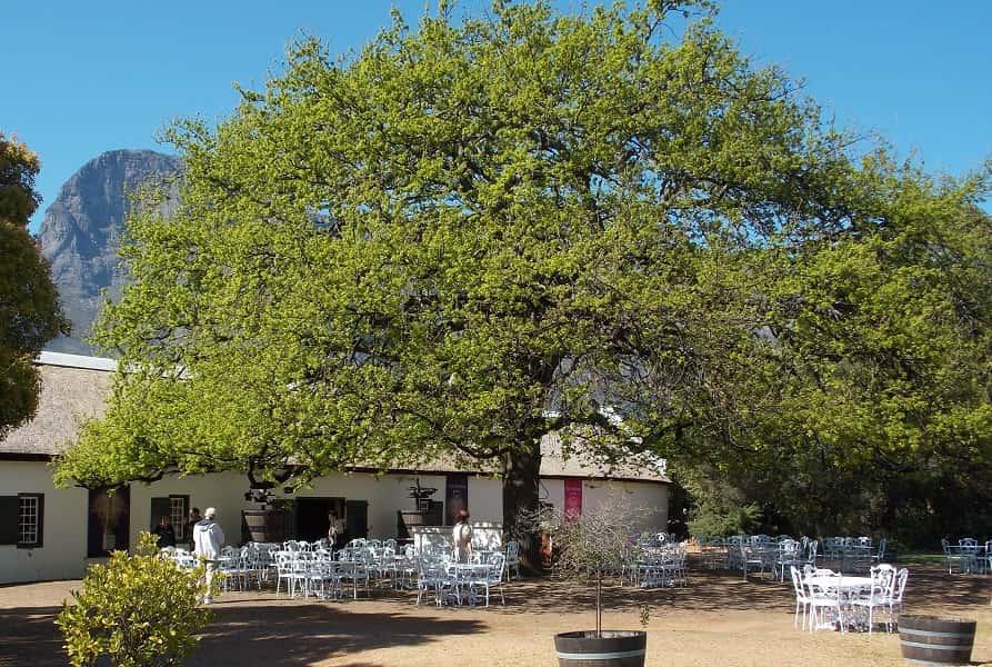 Отдых в ЮАР. Винная ферма возле Кейптауна