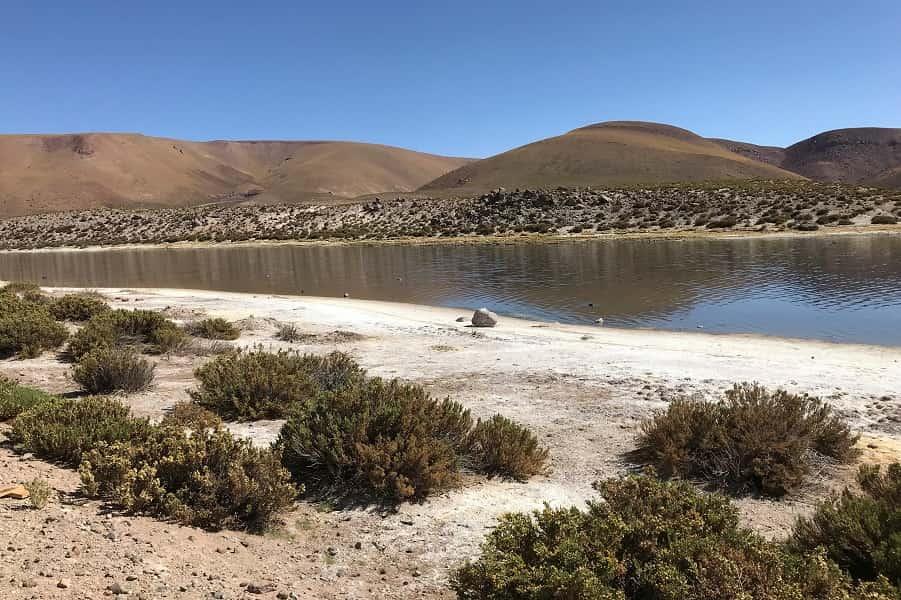 Чили. Поездка в Атакаму