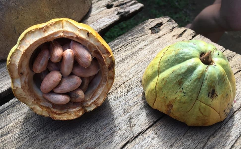 Поезда в Коста Рику. Плод какао
