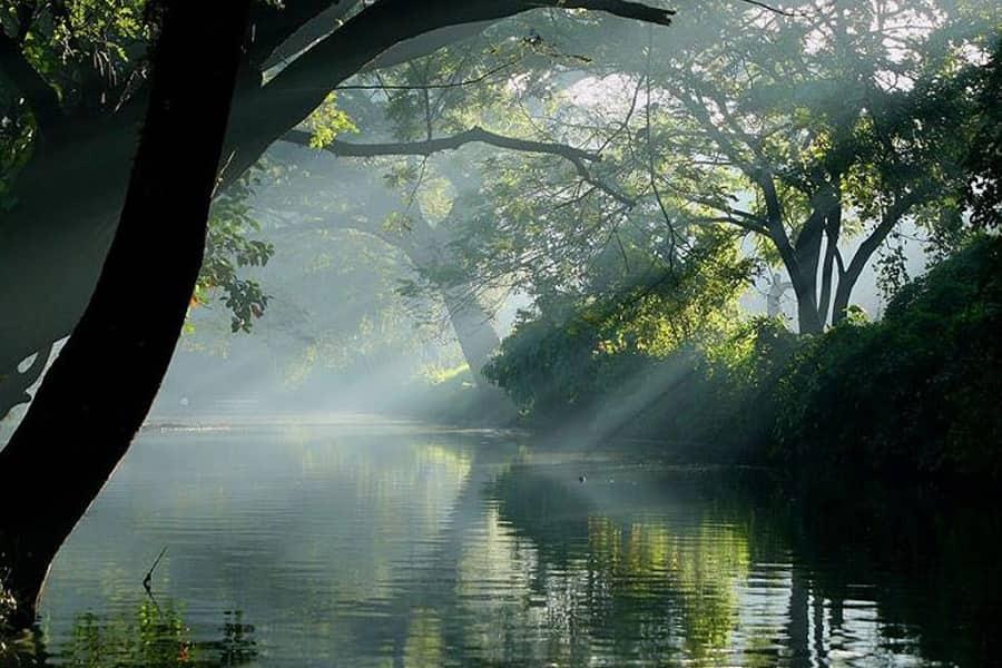 Поездка по Индии. Андаманская природа
