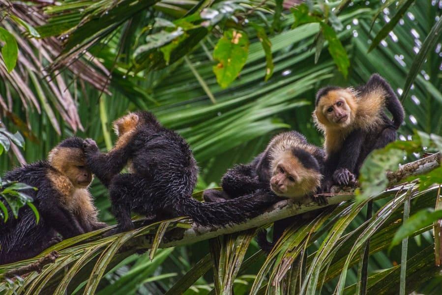 Поездка в Коста Рику. Обезьяны капуцины