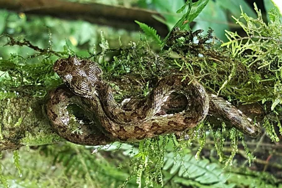 Поездка в Коста Рику. Ядовитая змея фото