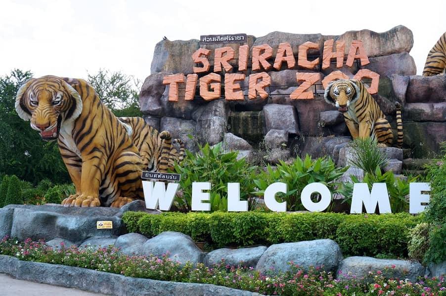 Поездка в Тайланд. Тигровый зоопарк. Паттайя