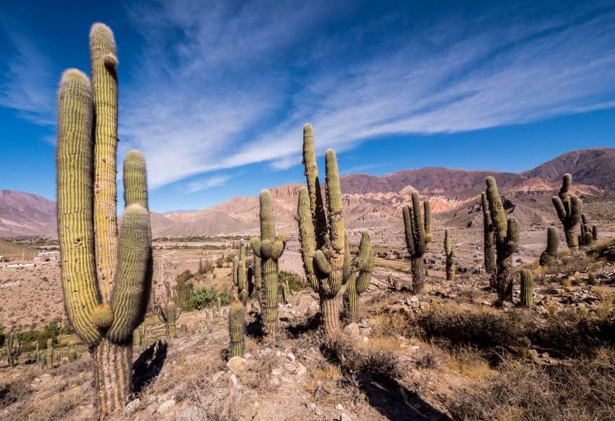 Поезка в Аргентину. Сальта. Парк кактусов Лос Кардонес