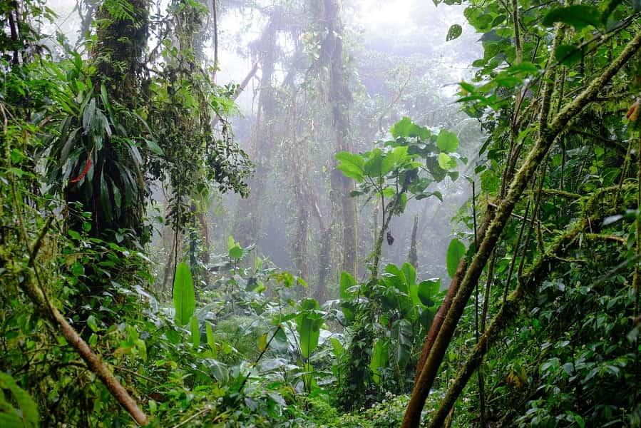 Путешествие в Коста Рику. Заповедник Монте Верде