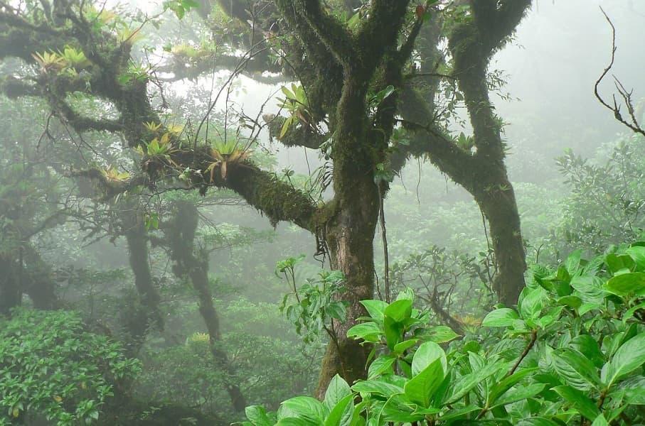 Путешествие в Никарагуа. Облачный лес Момбачо