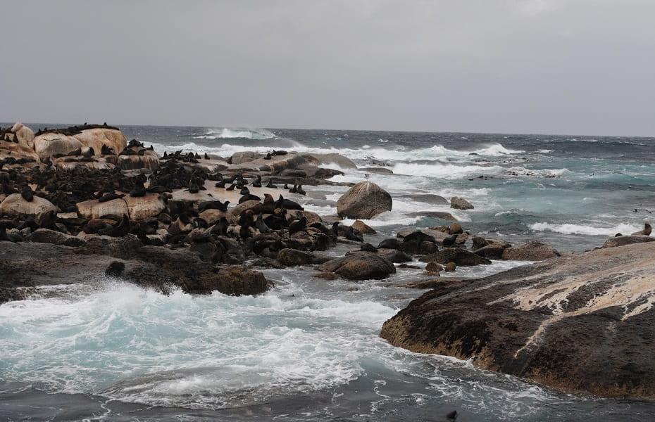 Путешествие в ЮАР. Морские котики в Кейптауне