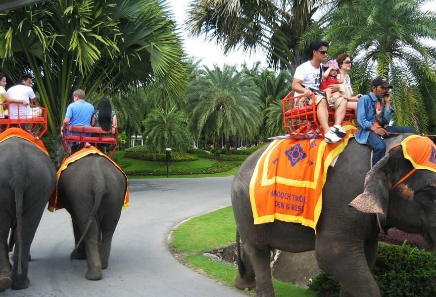 Путевка в Тайланд. Паттайя. Нонг нуч, прогулка на слонах