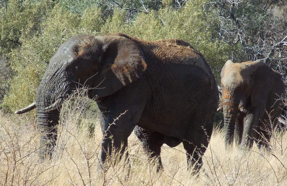 Сафари со слонами в ЮАР