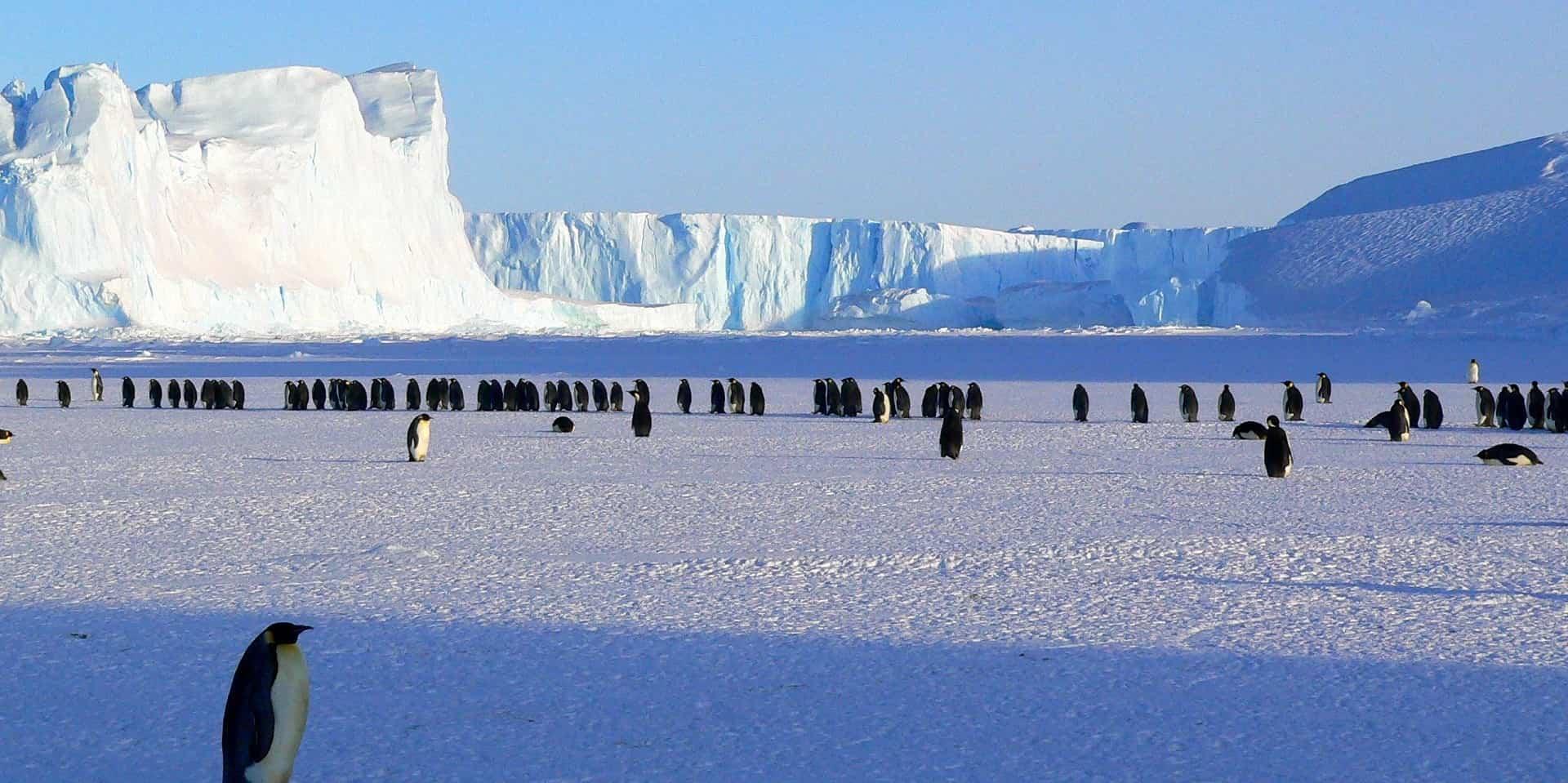 Тур в Антарктиду фото