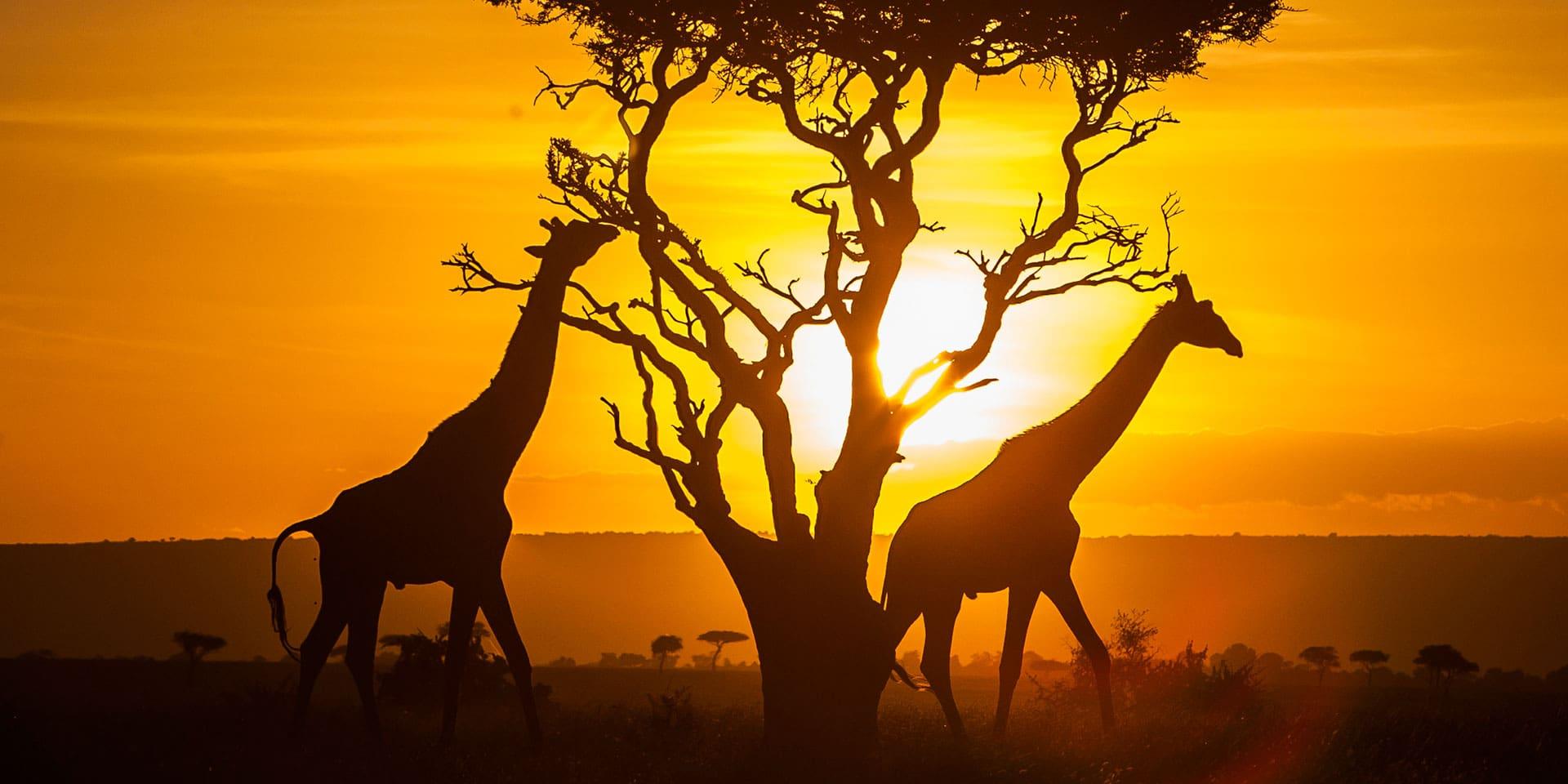 Тур в Танзанию. Нгоронгоро