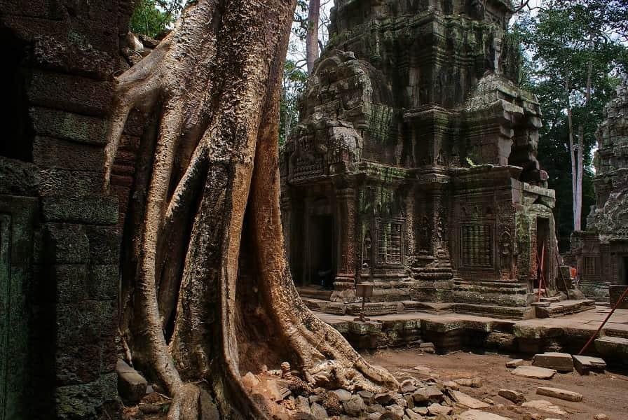 Туры Камбоджу. Сием Риеп. Корни деревьев в Та Пром