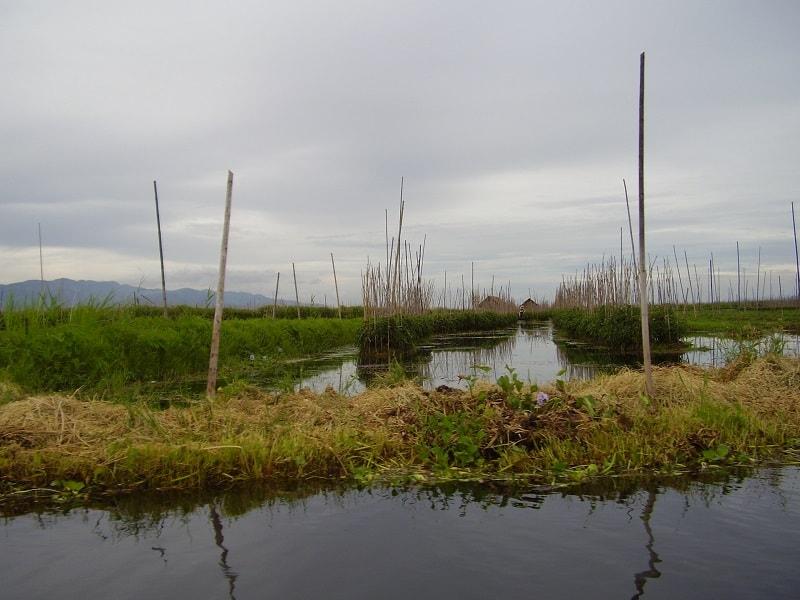 Туры в Бирму. Озеро Инле. Плавучие огороды фото