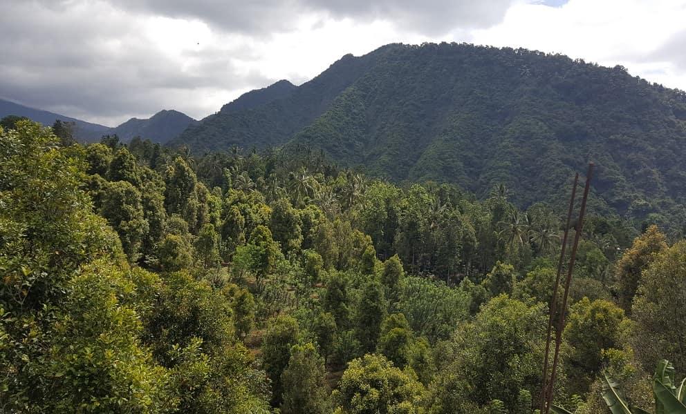 Туры в Индонезию. Бали. Дорога к водопаду Секумпуль