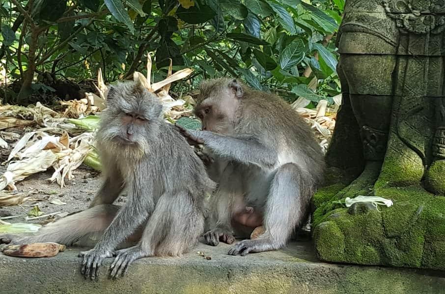 Туры в Индонезию. Бали. Убуд. Лес обезьян