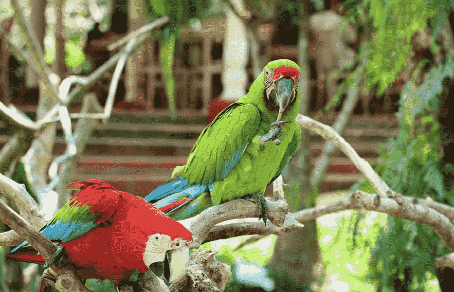 Туры в Индонезия. Попугаи в Убуде фото