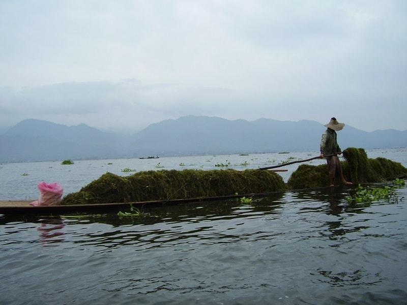 Туры в Мьянму. Сбор тины со дна озера Инле для удобрений