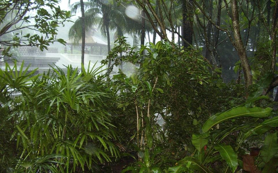 Туры в Мьянму. Тропический дождь