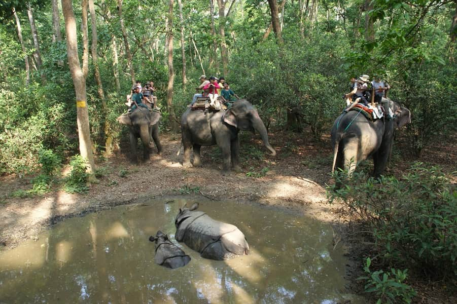 Туры в Непал. Читван. Сафари на слонах