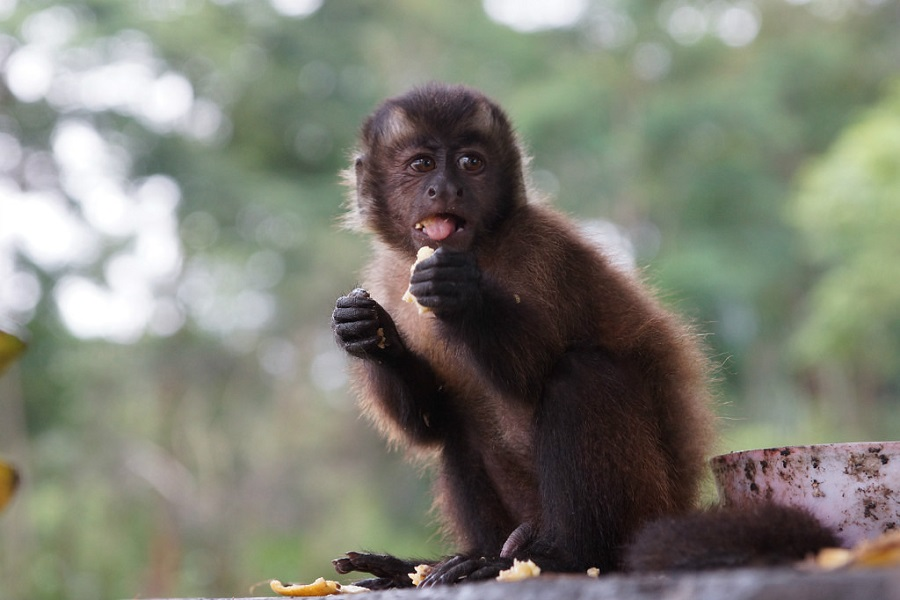 Остров обезьян  фото Амазонка Перу